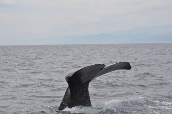 Whale_kujira65876.jpg