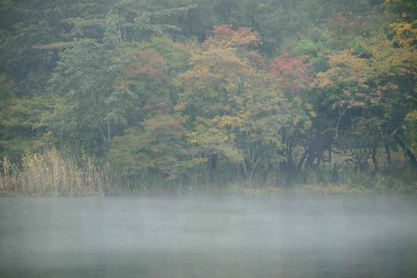 紅葉蓼科湖 2 - 蓼 ―たてしな― 科 の 風 光
