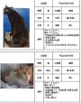 .☆犬猫救済の輪より茨城県及び茨城県動物指導センターへ  「いのちの提言」総まとめ  茨城県犬猫の殺処分ゼロを実現するために