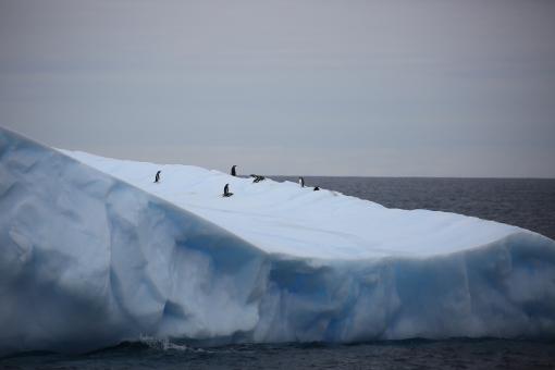 Antarctic738678.jpg