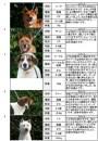 里親さんブログ.拡散希望☆熊本市動物愛護センター、犬のSOS 続報  ☆1年前のいばらき自民党、舘静馬先生の議会質疑より ☆多頭飼育猫受入れました