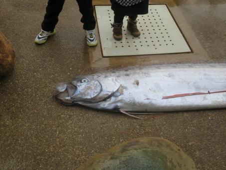 fish_ryuuguu68768.jpg