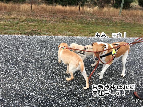 26032019_dog5.jpg