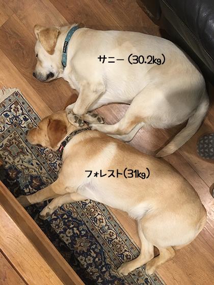 08072019_dogpic2.jpg
