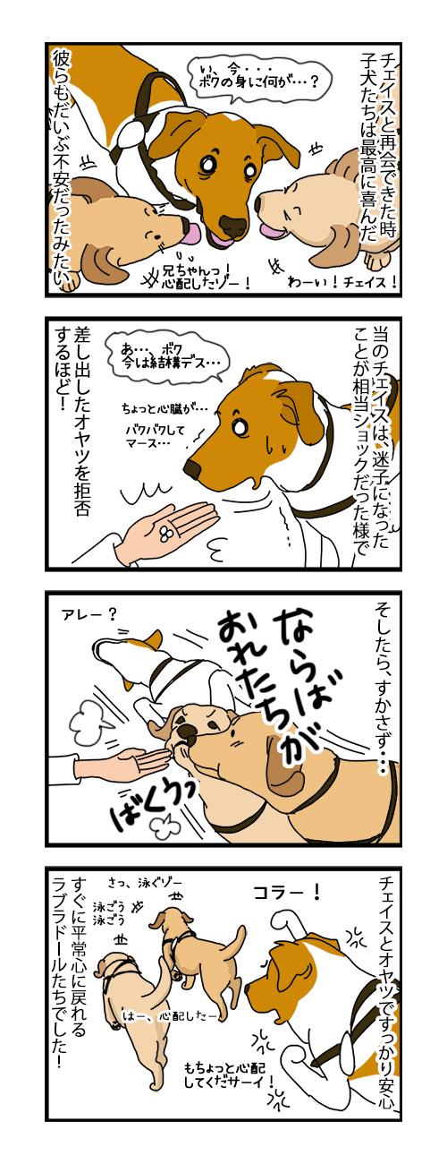 09082019_dog4koma.jpg