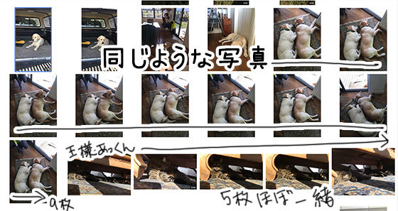 16062019_dogpic2.jpg