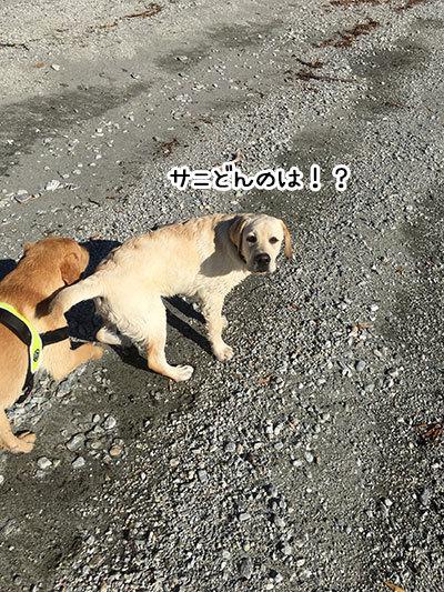 18052019_dog5.jpg