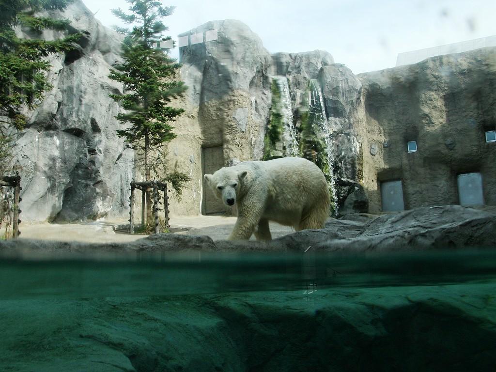 旭山動物園ほっきょくぐま館 - Rambling On My Hokkaido 北海道の観光 ...