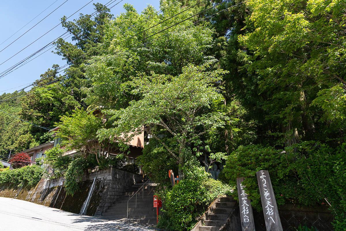 The B grade ・・・ 巨樹の記録 ≪杉の大杉≫