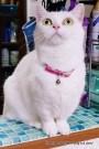 里親さんブログ.好奇心のある表情