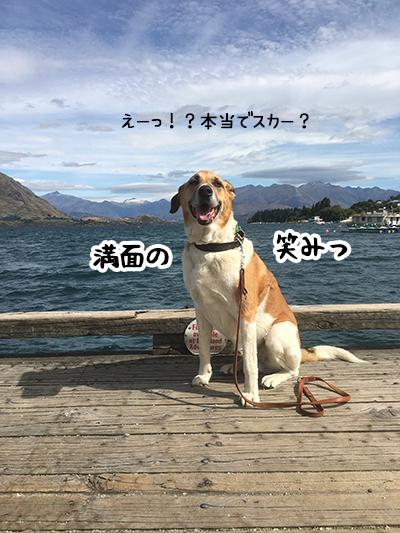 01022020_dog2.jpg