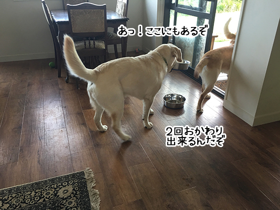 10012020_dog5.jpg