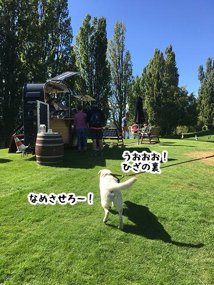 29022020_dogpic4.jpg