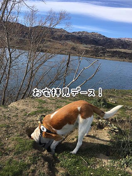 31082019_dog2.jpg