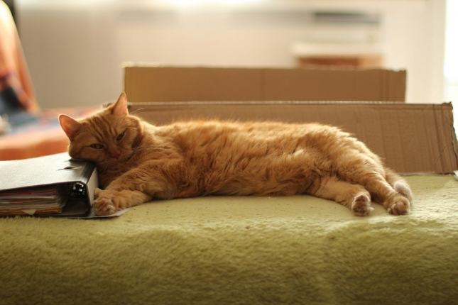 cat-1517481_1280.jpg