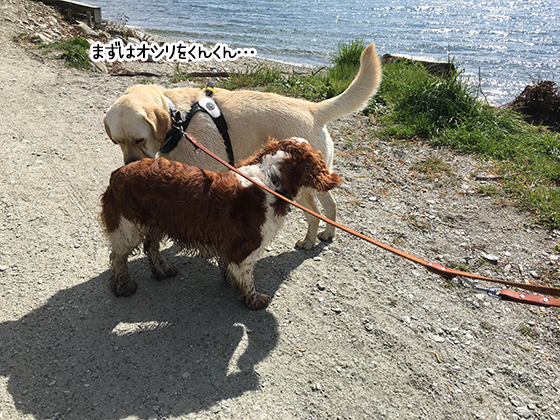 11102020_dogpic3.jpg