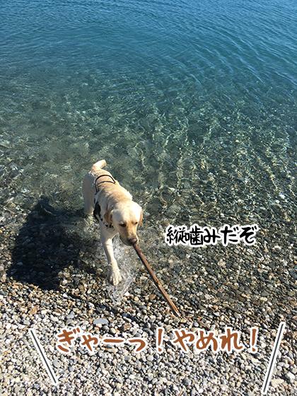 13012021_dog6.jpg