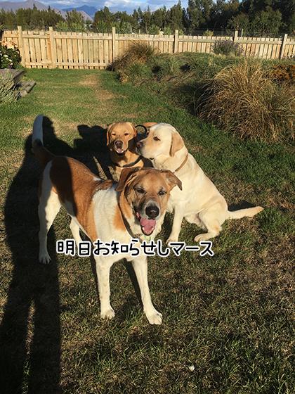 17032021_dogpic4.jpg