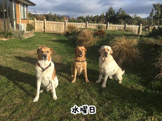 23052021_dog3Wednesday.jpg