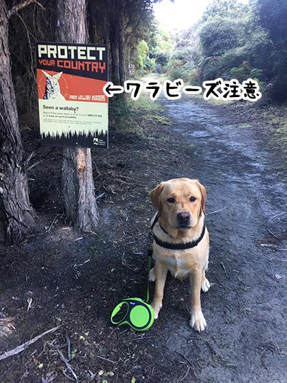 23052021_dogpic2.jpg