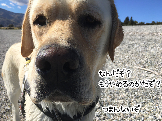 31032021_dogpic4.jpg