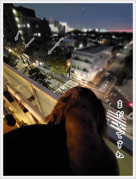 fc2_2021-03-26_02.jpg