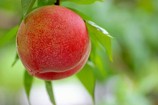 Peach2346.jpg