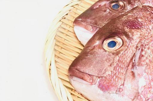 fish876.jpg