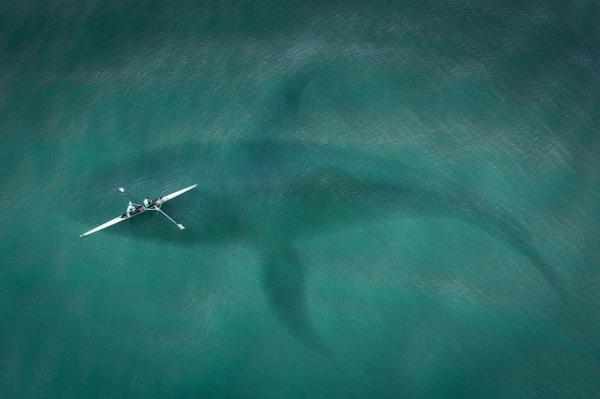 shark_boat-2435056_640.jpg