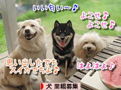 にほんブログ村 犬ブログ 犬 里親募集へ