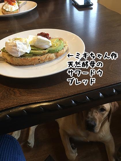13062021_dogpic7.jpg
