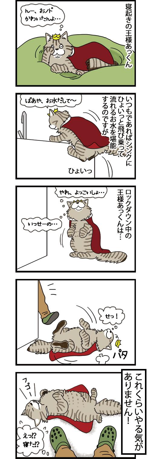 23082021_dogcomic.jpg