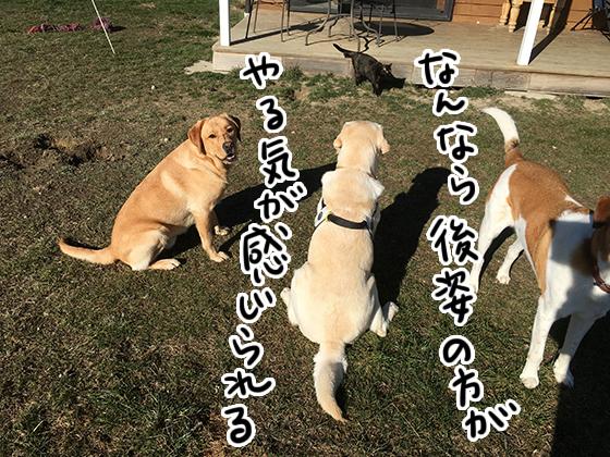 24082021_dogpic1.jpg