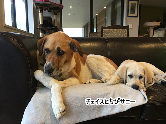 25082021_dogpic3.jpg