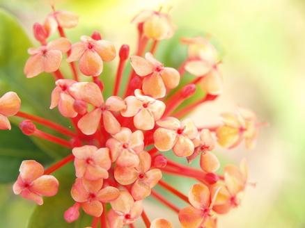 屋久島紀行(32) -里の花々-
