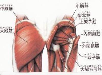 「臀部 」の画像検索結果