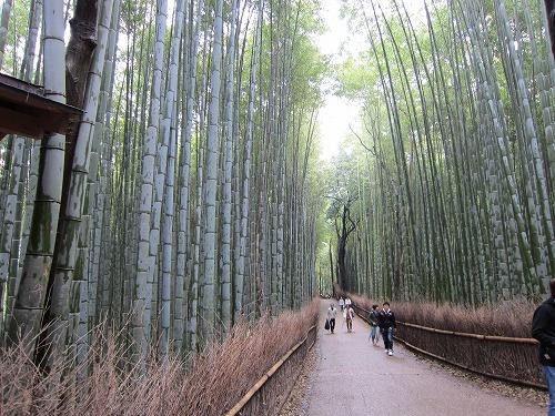 竹林の道 3