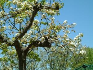 asahikawa+037_convert_20100604212719.jpg