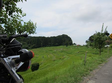 大山千枚田 6