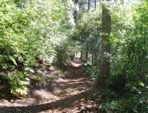 McCloud trail 090910
