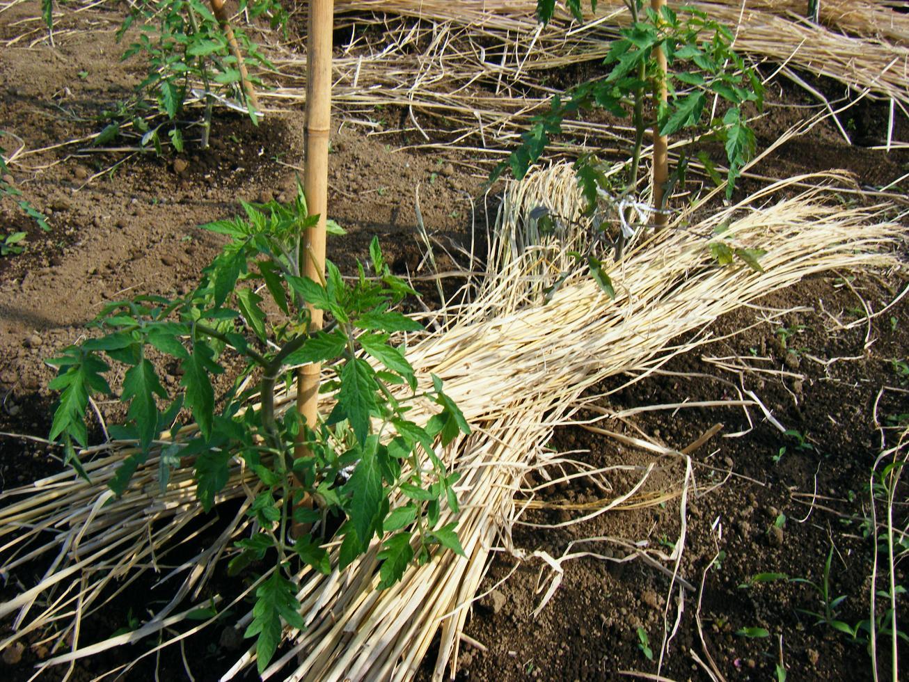 農業革命 ~內部からの改革~ 藁を頂きました