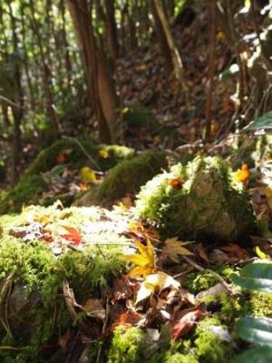 web 太古の森 1 2013-11-27 029