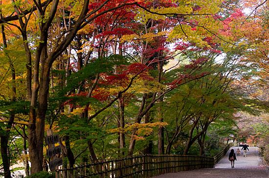 東山植物園便り ---紅葉見頃まであと少し