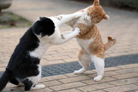 「猫のケンカ」の画像検索結果