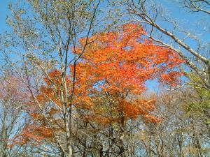 nasu2011+020_convert_20111028132857.jpg
