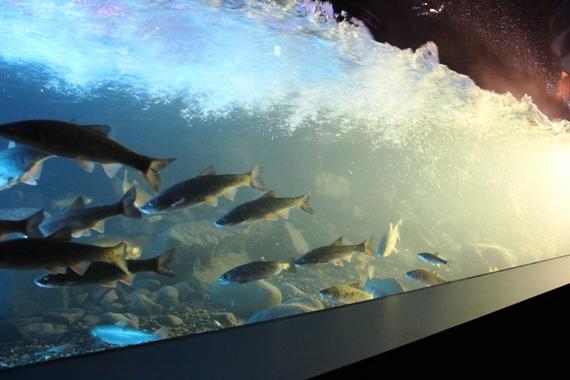山の水族館 ナイト営業 凍る水槽の写真