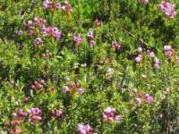 panther Meadows 081210-7
