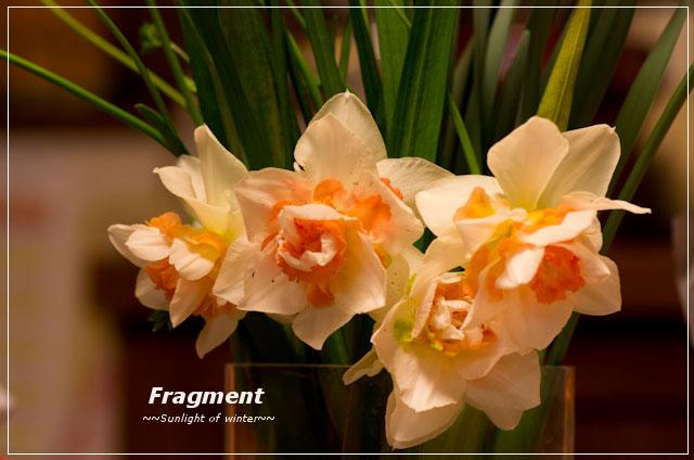 Fragment な ふたり すいせんの花の構造