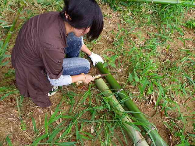 竹のサイズあわせ