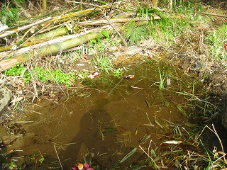 川下に作った小さな池